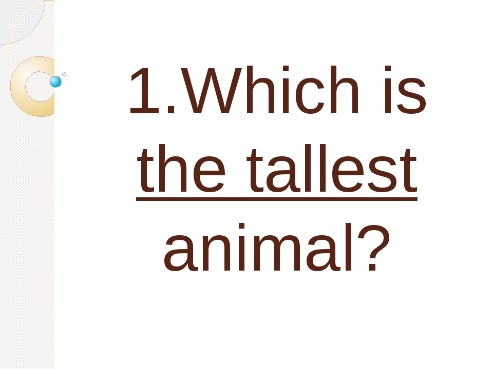 1.Which is the tallest animal?