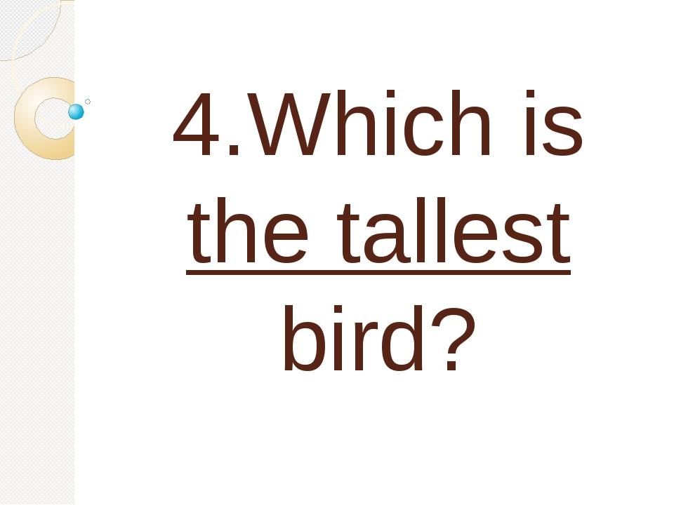 4.Which is the tallest bird?
