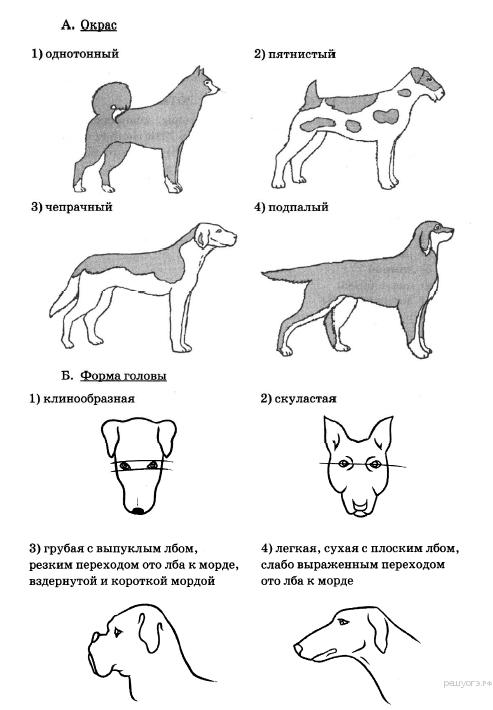 Формы собаки картинки