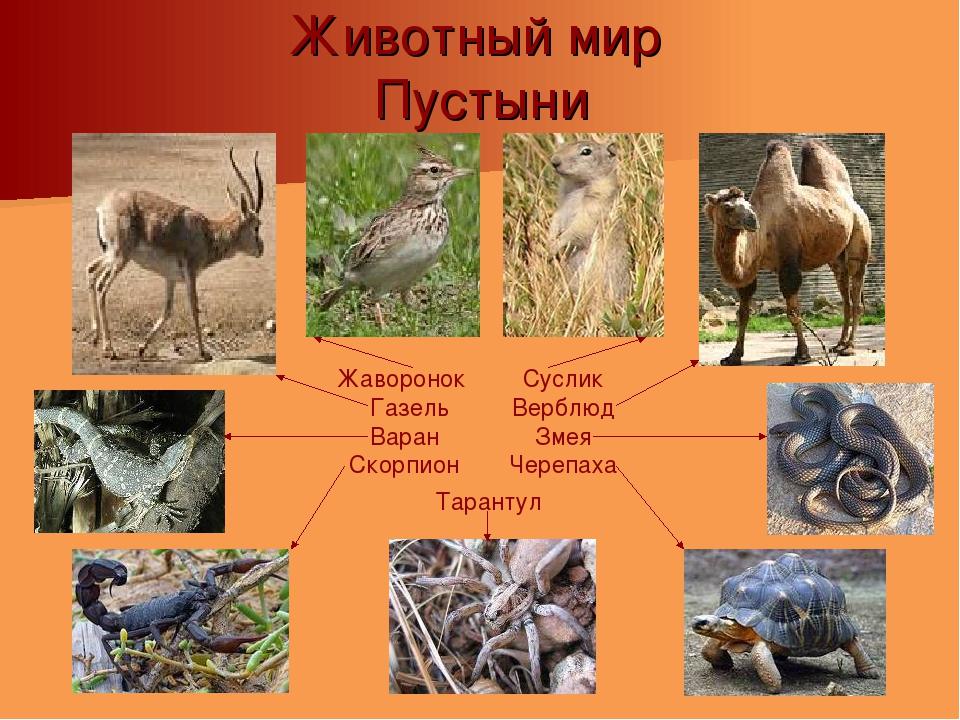 Животные пустыни описание с картинками