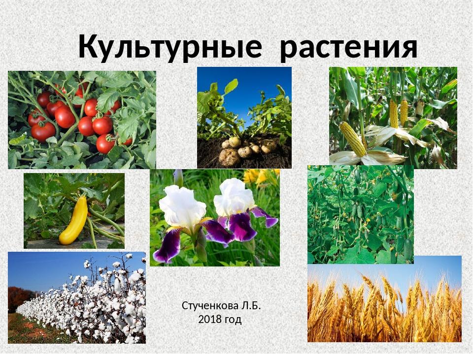 эти все культурные растения названия построено