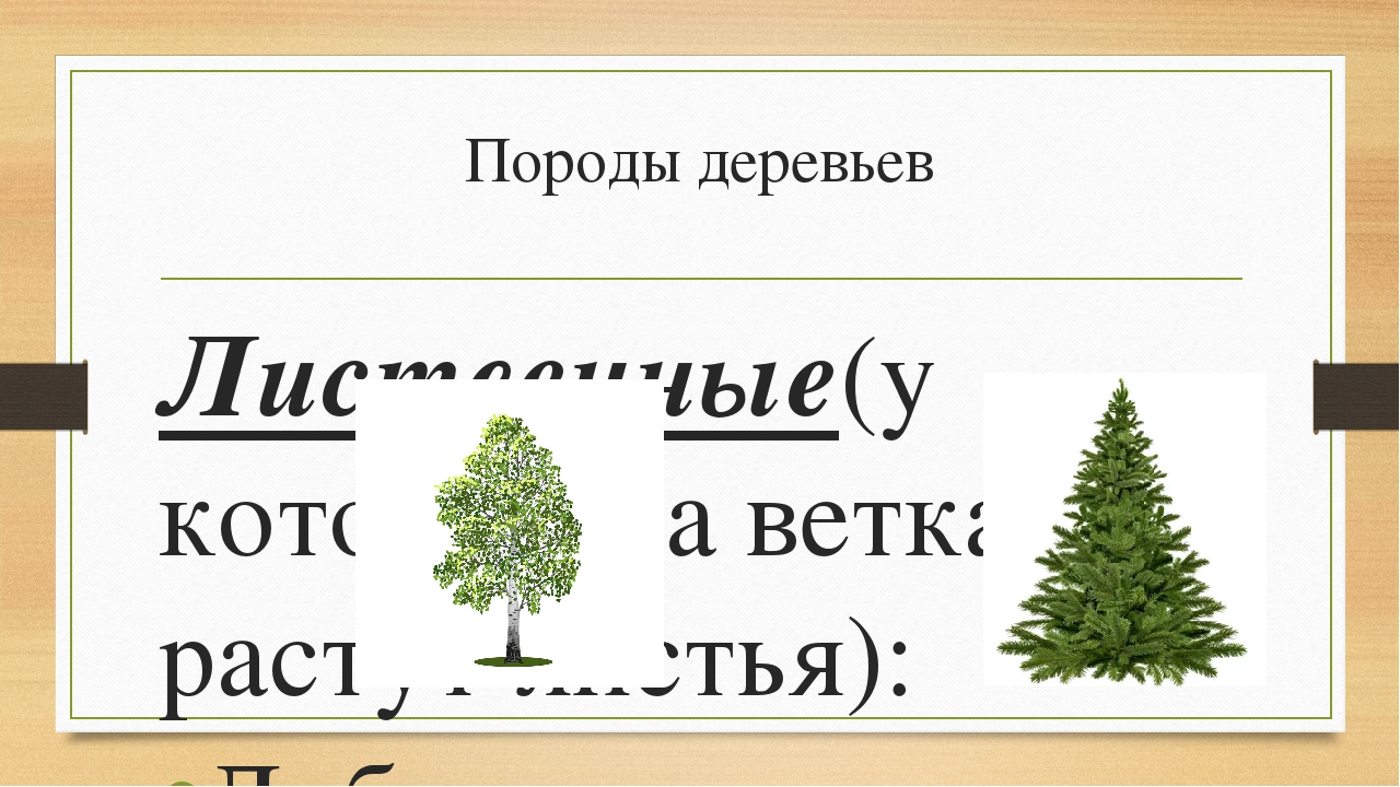 Породы деревьев Лиственные(у которых на ветках растут листья): Дуб Берёза Лип...