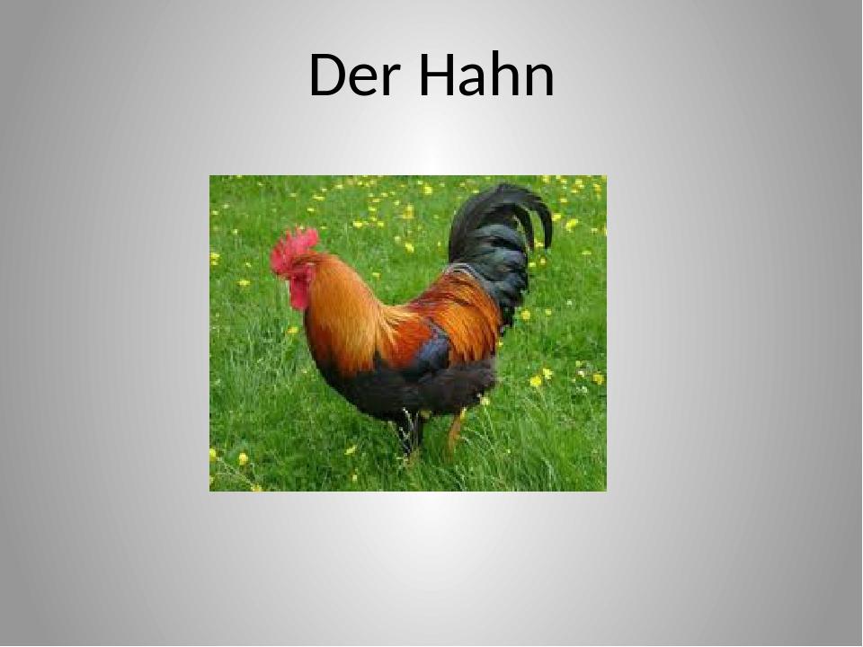 Der Hahn