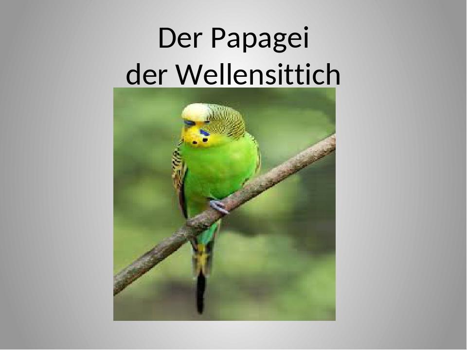 Der Papagei der Wellensittich