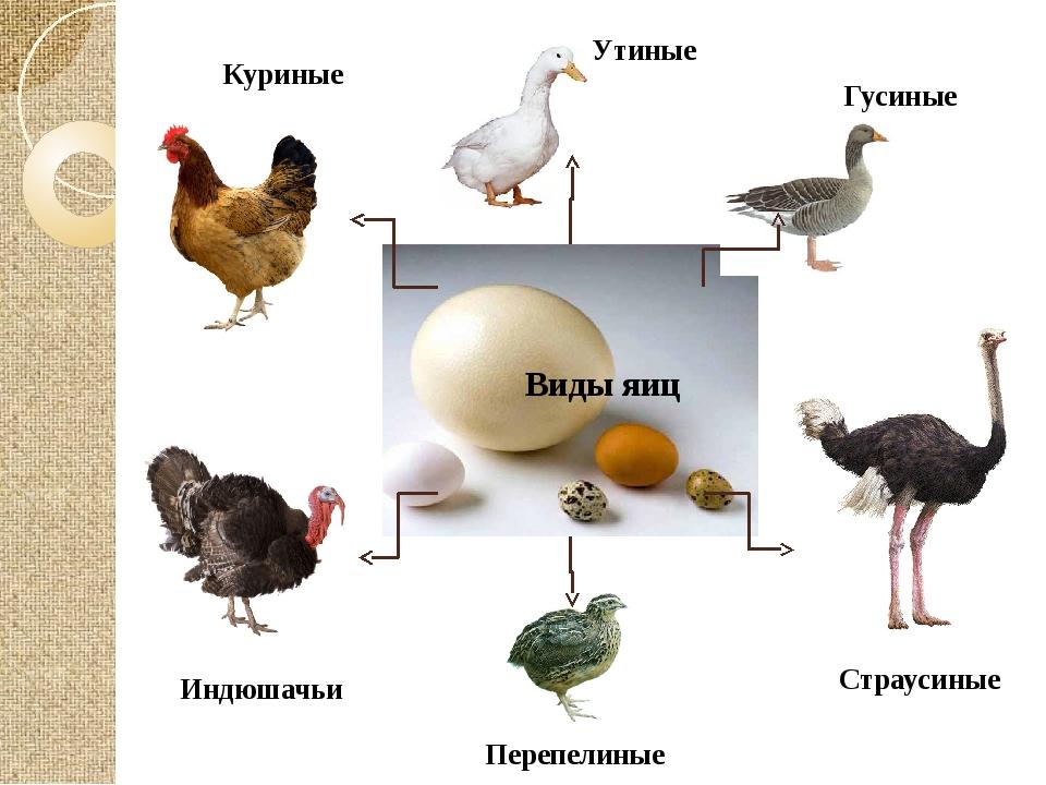 Куриные Утиные Гусиные Индюшачьи Страусиные Виды яиц Перепелиные