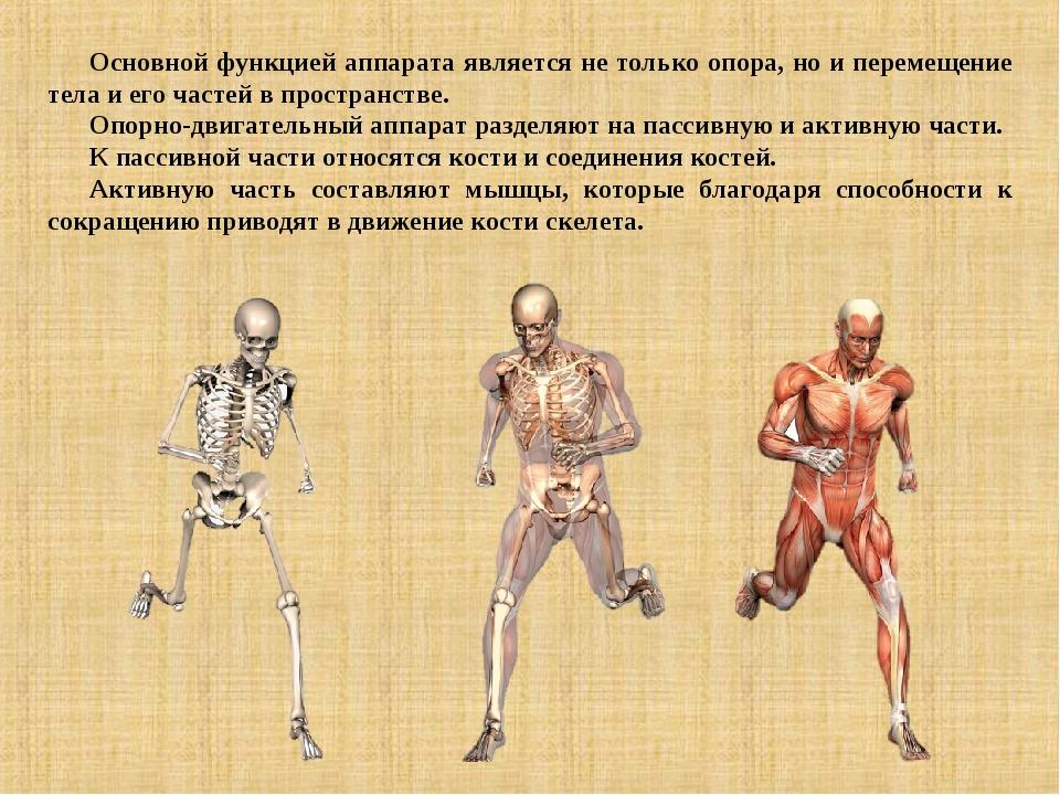 Основной функцией аппарата является не только опора, но и перемещение тела и...