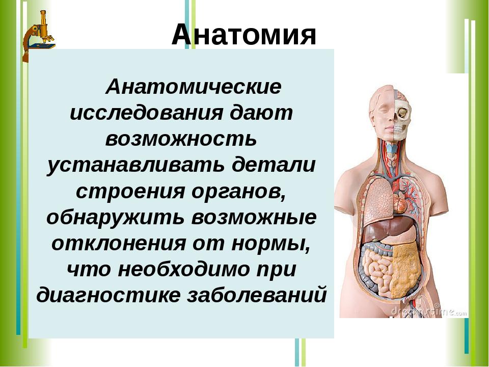 Анатомия Анатомические исследования дают возможность устанавливать детали ст...
