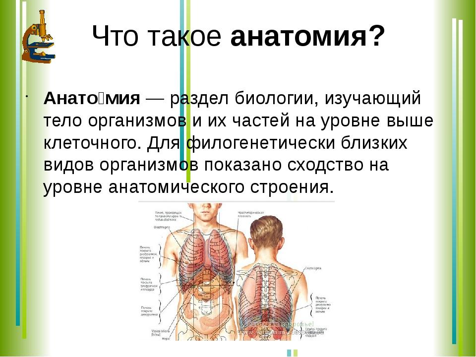 Что такое анатомия? Анато́мия — раздел биологии, изучающий тело организмов и...