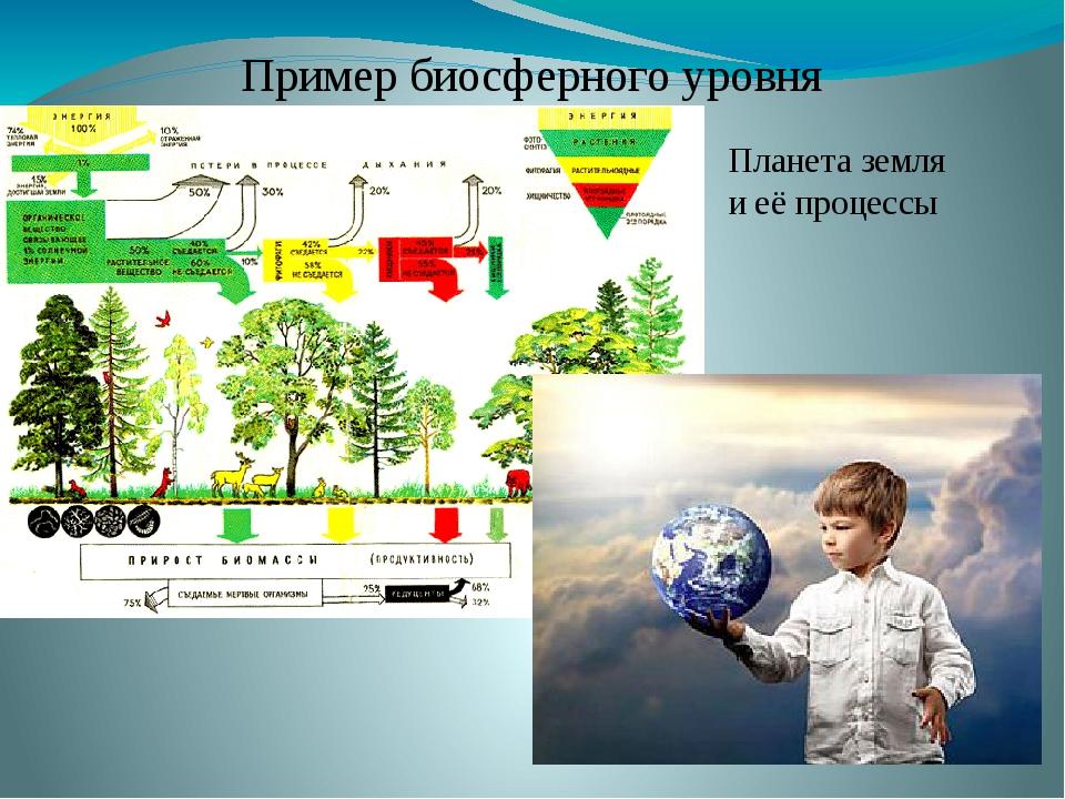 Пример биосферного уровня Планета земля и её процессы