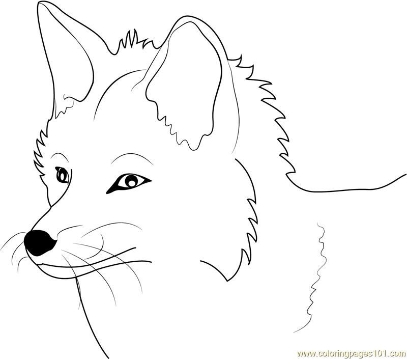 картинка лисы печать вам интересно близко