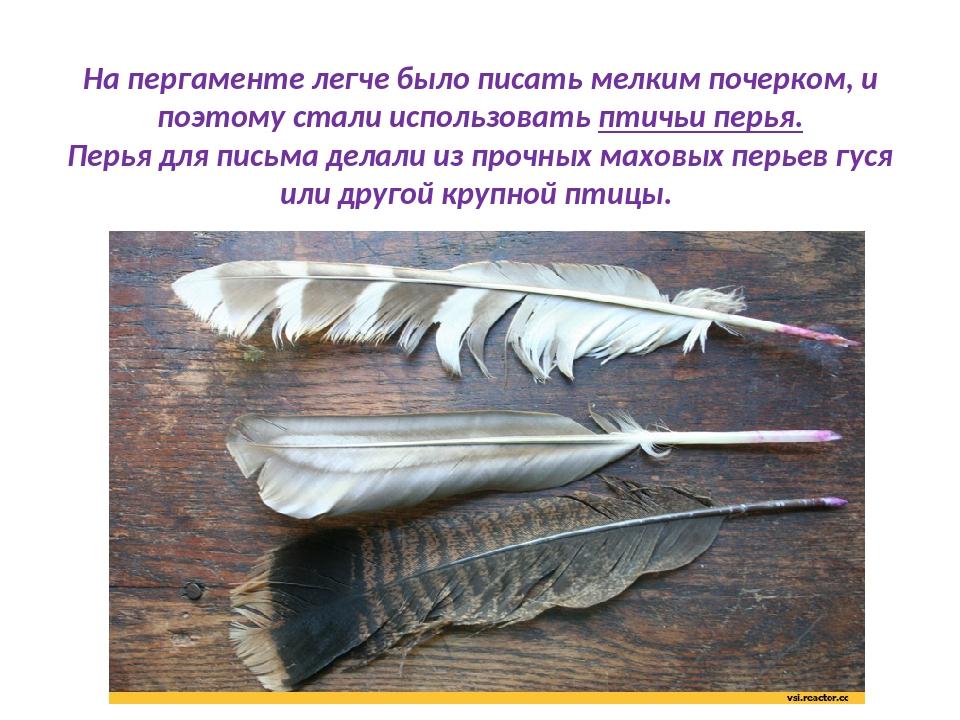 картинка гусиные перья которые в то время использовали для письма это рассматриваю