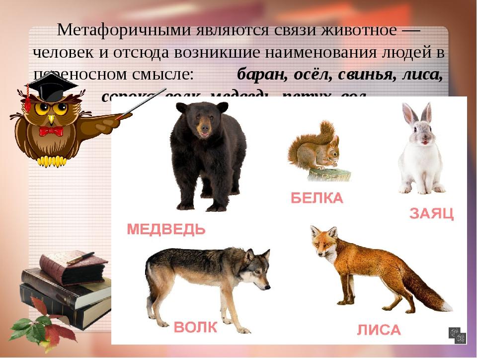 Метафоричными являются связи животное — человек и отсюда возникшие наименован...