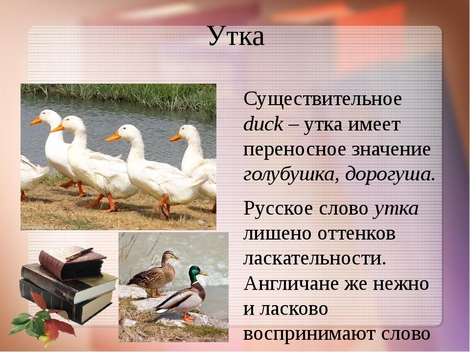 Утка Существительное duck – утка имеет переносное значение голубушка, дорогуш...