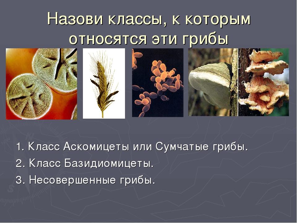 Назови классы, к которым относятся эти грибы 1. Класс Аскомицеты или Сумчатые...