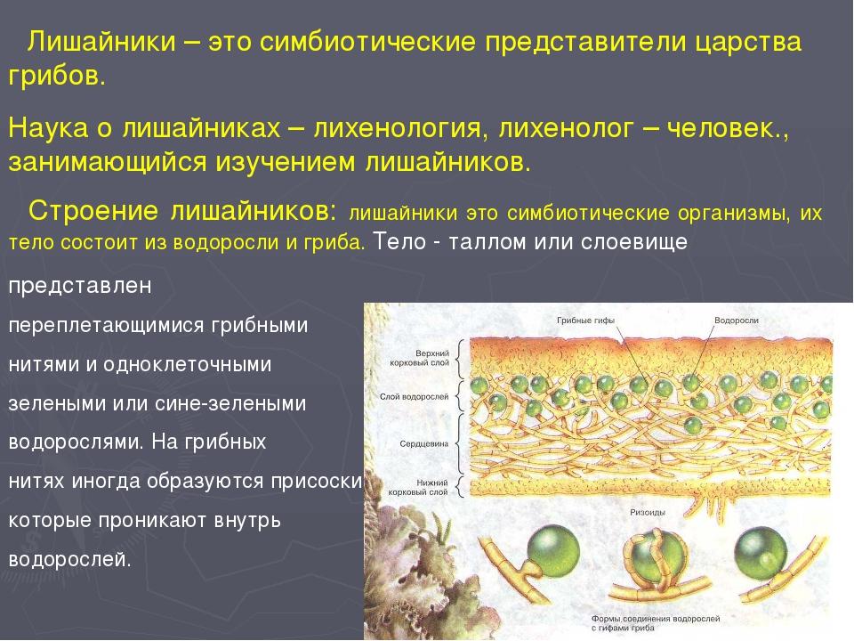 Лишайники – это симбиотические представители царства грибов. Наука о лишайни...