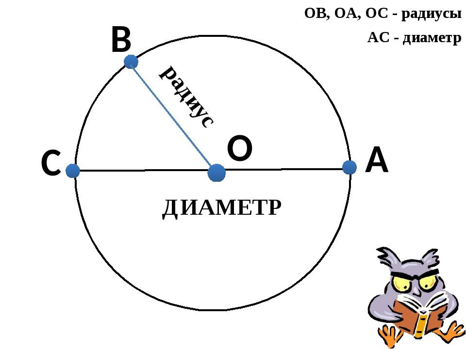 О А ОВ, ОА, ОС - радиусы АС - диаметр радиус С В ДИАМЕТР