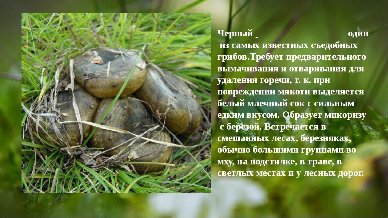 Черный один из самых известных съедобных грибов.Требует предварительного вы...