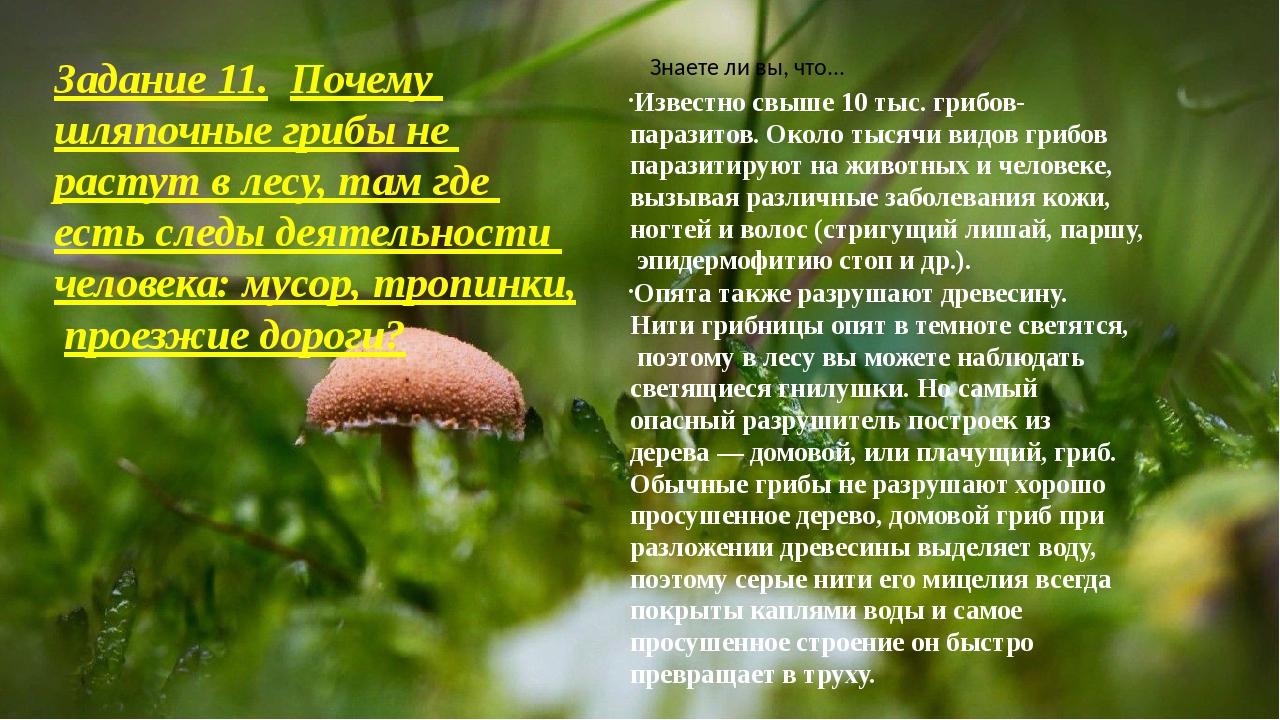 Задание 11.Почему шляпочные грибы не растут в лесу, там где есть следы деяте...