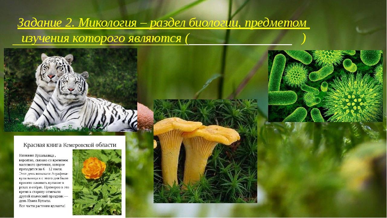 Задание 2. Микология – раздел биологии, предметом изучения которого являются...