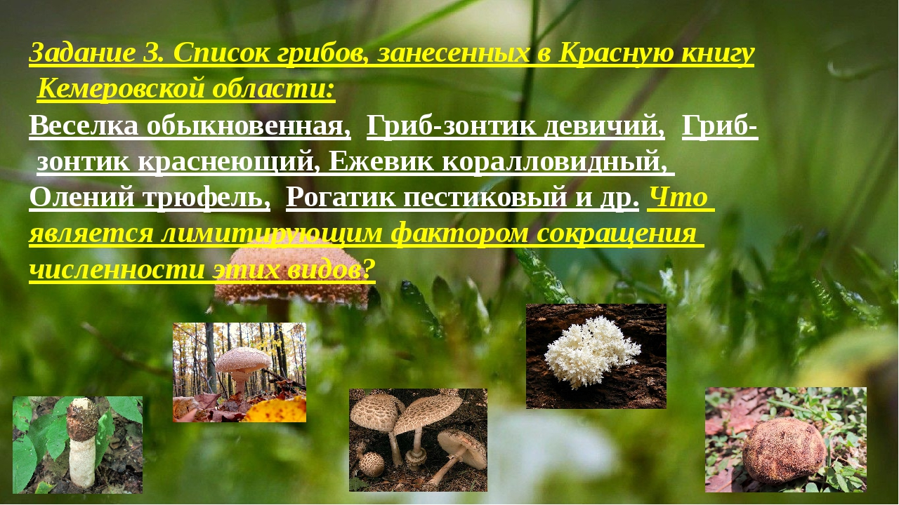 Задание 3. Список грибов, занесенных в Красную книгу Кемеровской области: Ве...