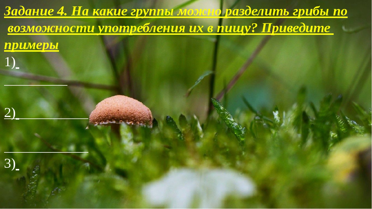 Задание 4. На какие группы можно разделить грибы по возможности употребления...