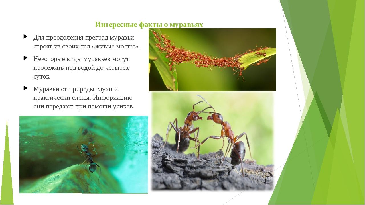 предложения факты о муравьях в картинках сложились так