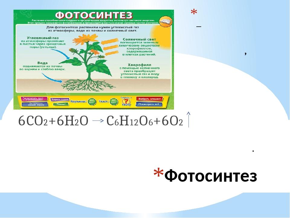 пляжи химическая формула фотосинтеза могут заказать