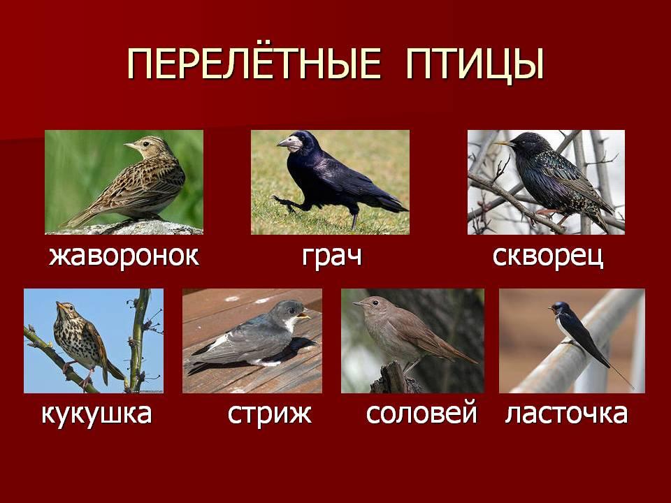 название перелетных птиц фото наше время
