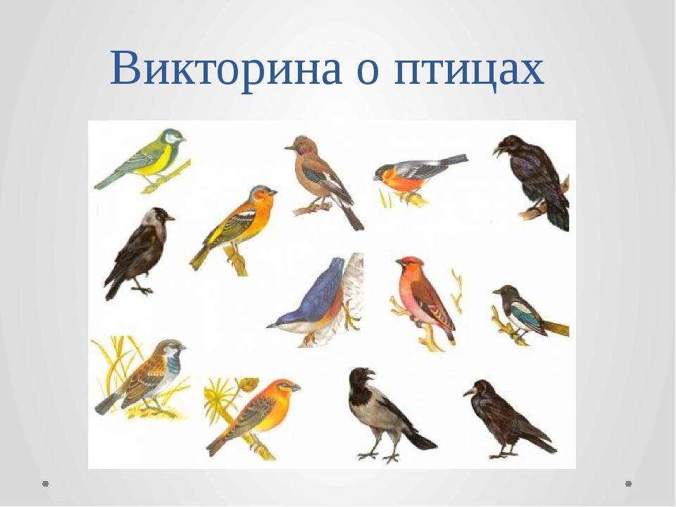 викторина о птицах картинка для повседневного лука