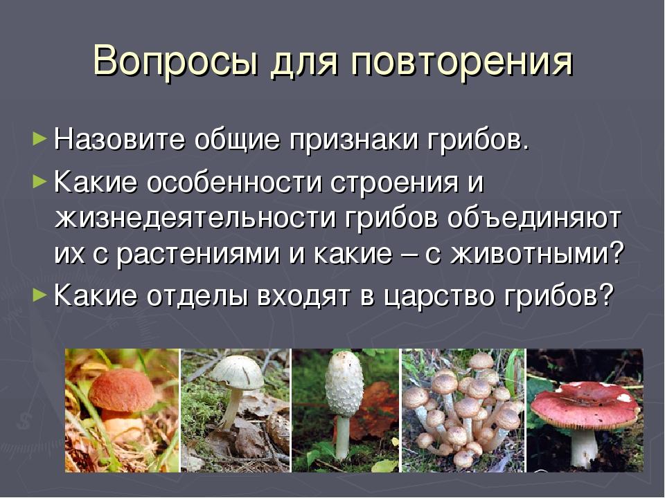ММЦ 74212 Вопросы для повторения Назовите общие признаки грибов. Какие особен...