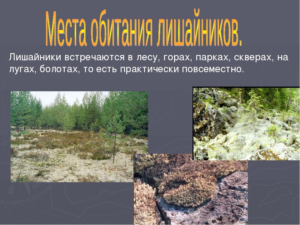 Лишайники встречаются в лесу, горах, парках, скверах, на лугах, болотах, то е...
