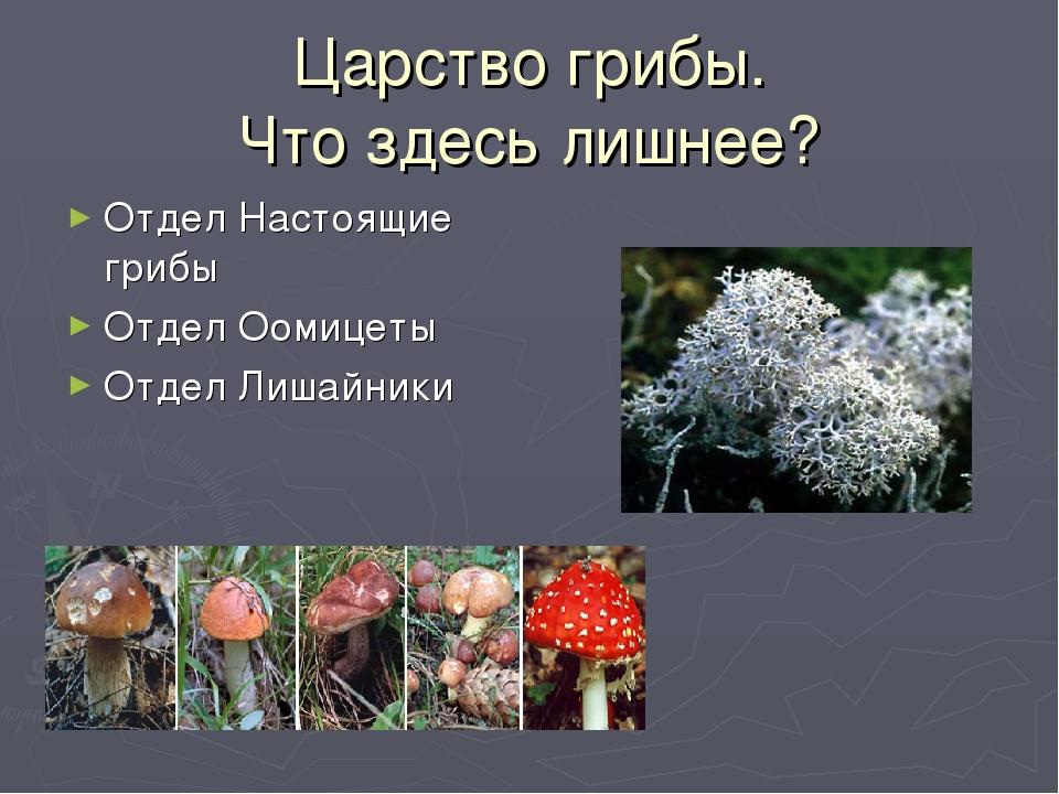 Царство грибы. Что здесь лишнее? Отдел Настоящие грибы Отдел Оомицеты Отдел Л...