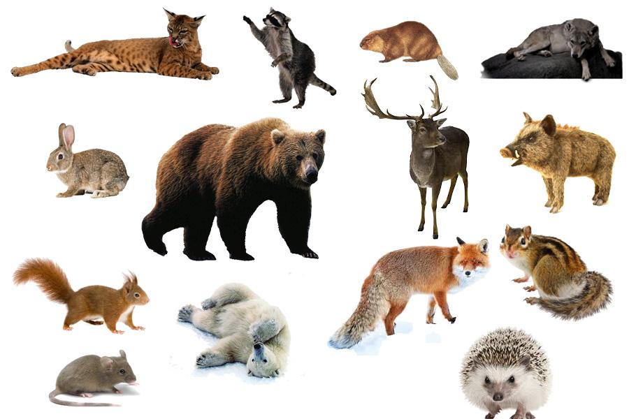 Детские картинки дикие животные
