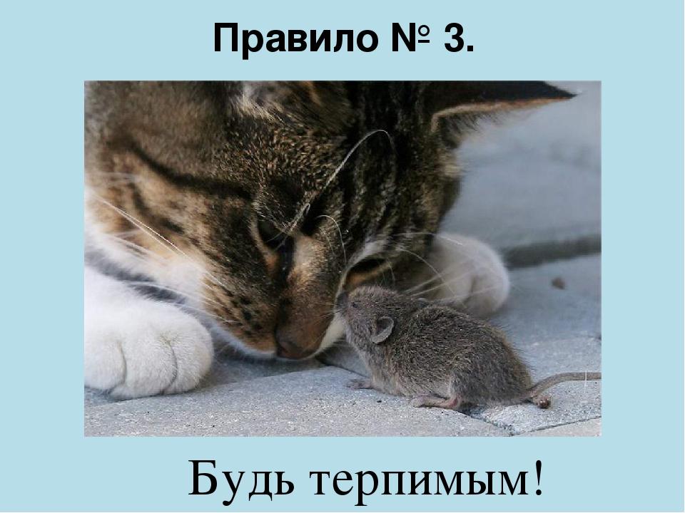 Правило № 3. Будь терпимым!