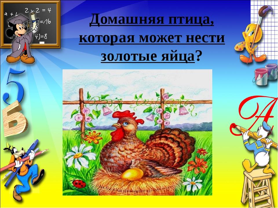 Домашняя птица, которая может нести золотые яйца?