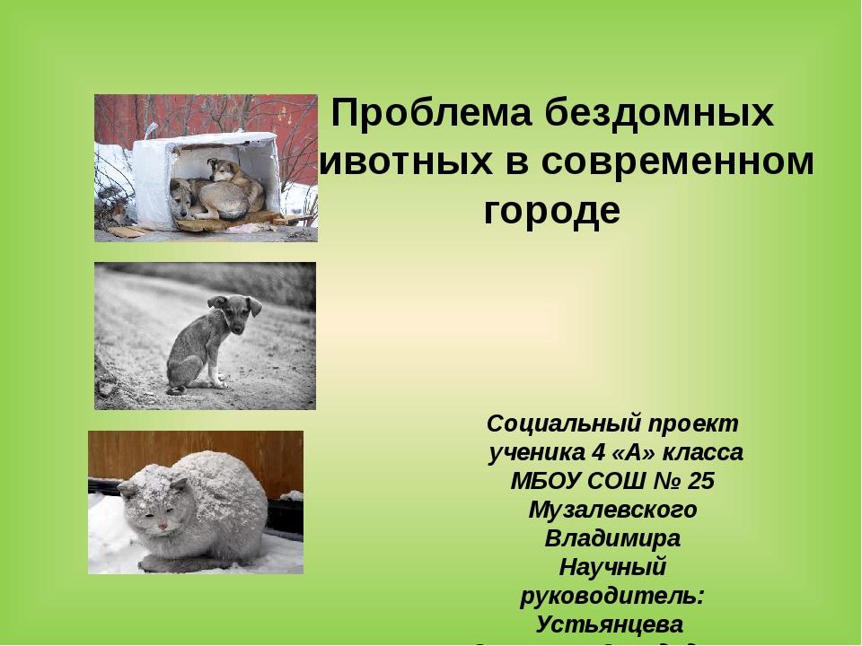 Проблема бездомных животных в современном городе Социальный проект ученика 4...
