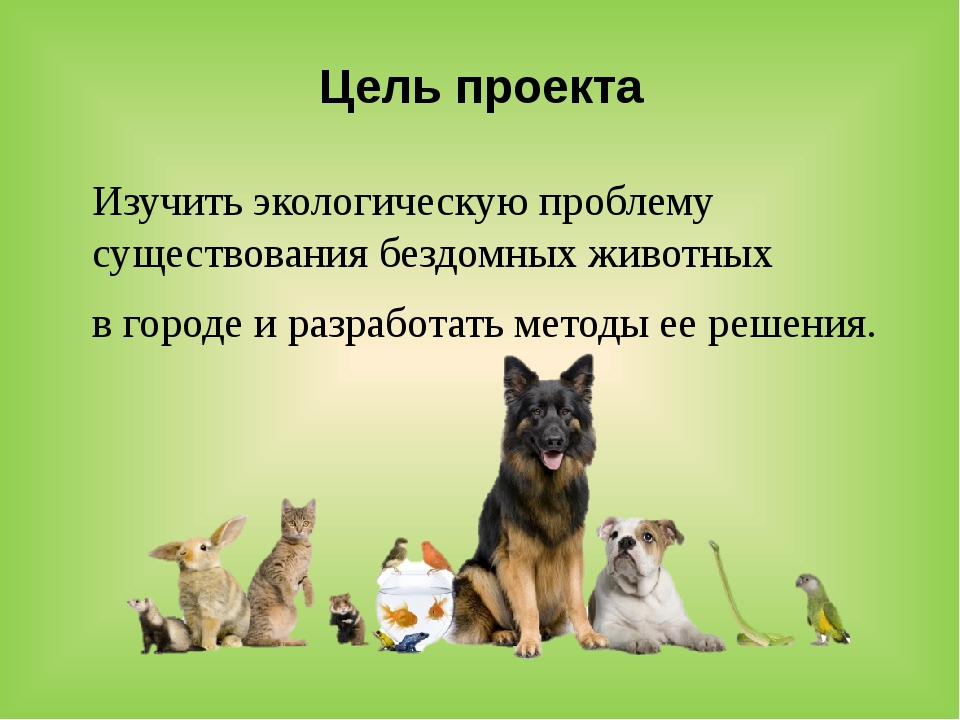Цель проекта Изучить экологическую проблему существования бездомных животных...