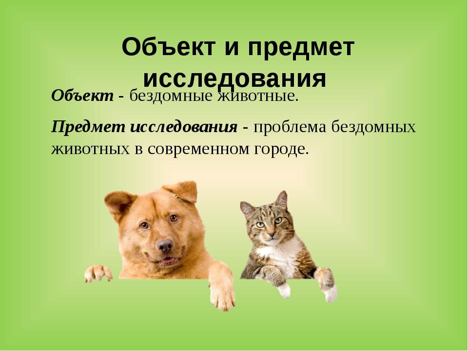 Объект и предмет исследования Объект - бездомные животные. Предмет исследова...