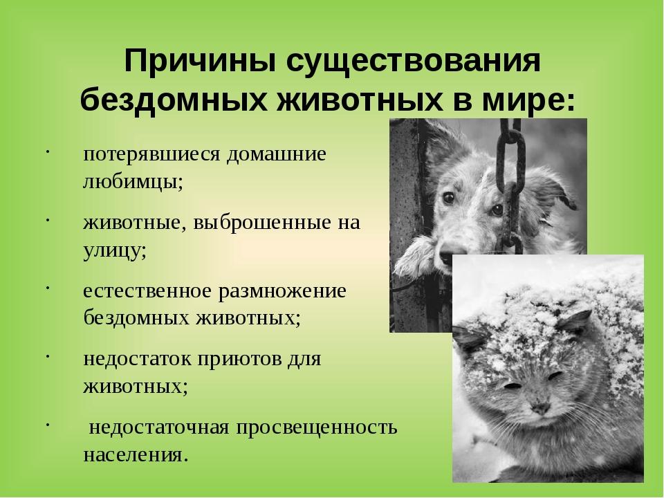 Причины существования бездомных животных в мире: потерявшиеся домашние любимц...
