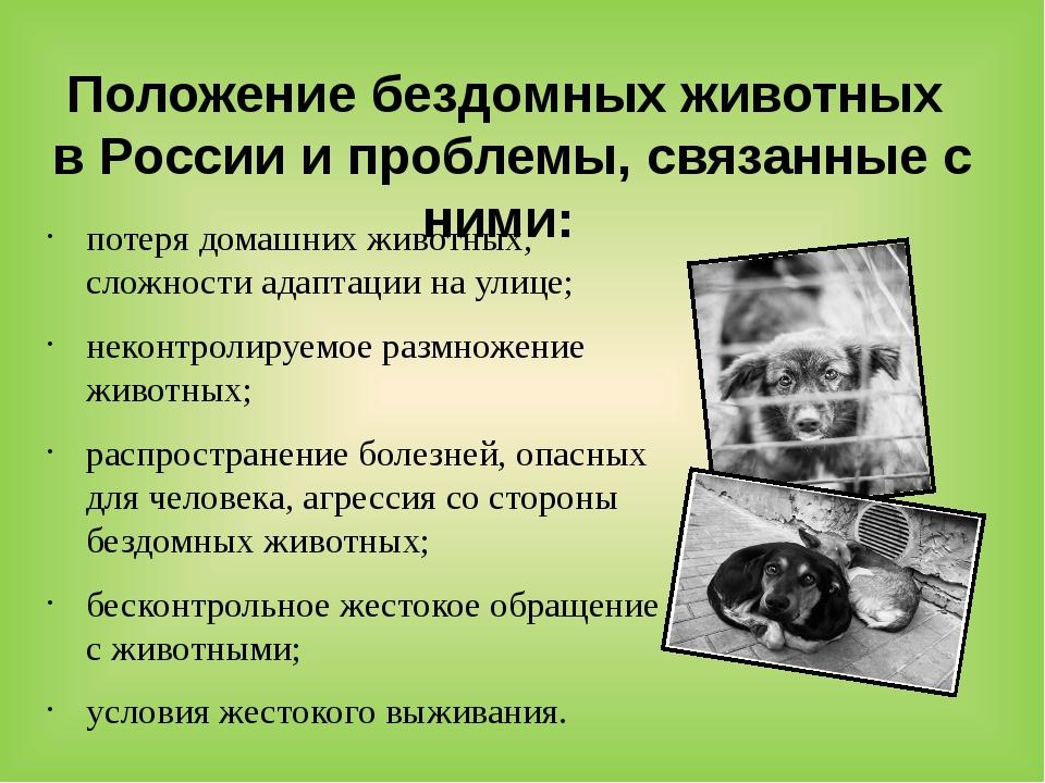 Положение бездомных животных в России и проблемы, связанные с ними: потеря до...