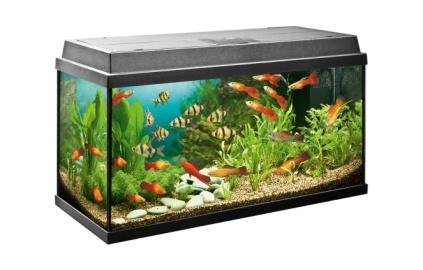 практическая работа 2 аквариум как девушка модель экосистемы 11