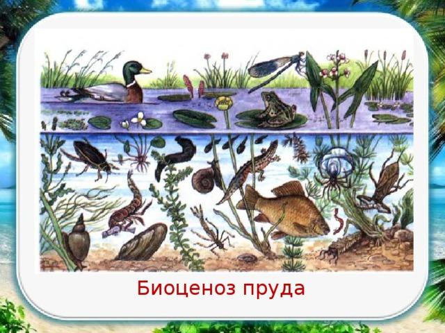 аквариум как девушка модель экосистемы практическая работа 11 класс беляев