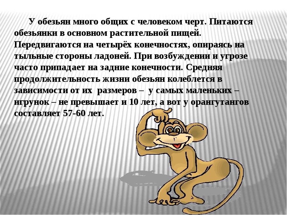Самым маленьким приматом на земле принято считать карликовую игрунку. Её раз...
