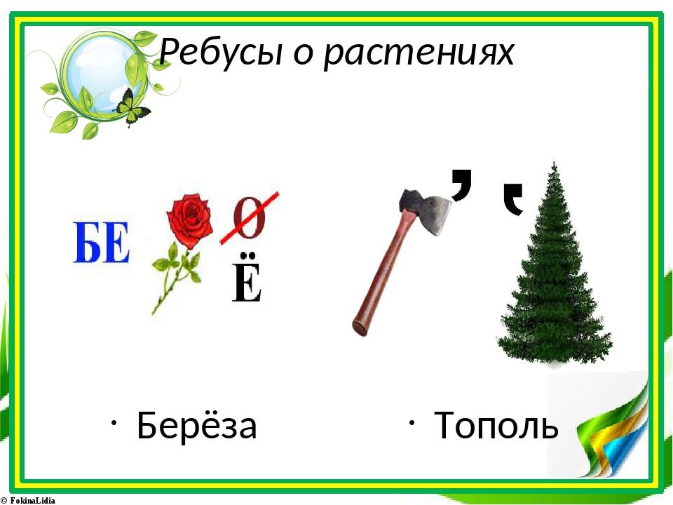 Ребусы о растениях Берёза Тополь © FokinaLidia