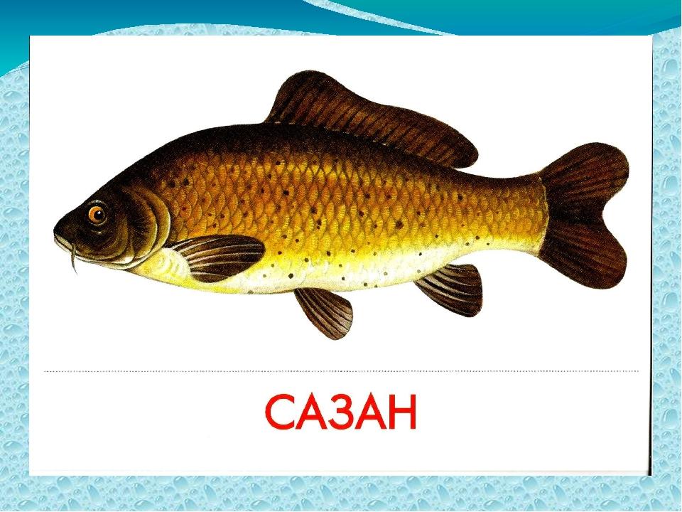 Картинки речной рыбы для детей