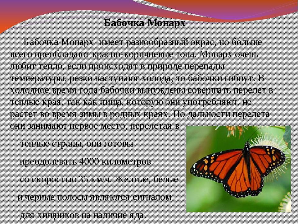 Бабочка Монарх Бабочка Монарх имеет разнообразный окрас, но больше всего пре...