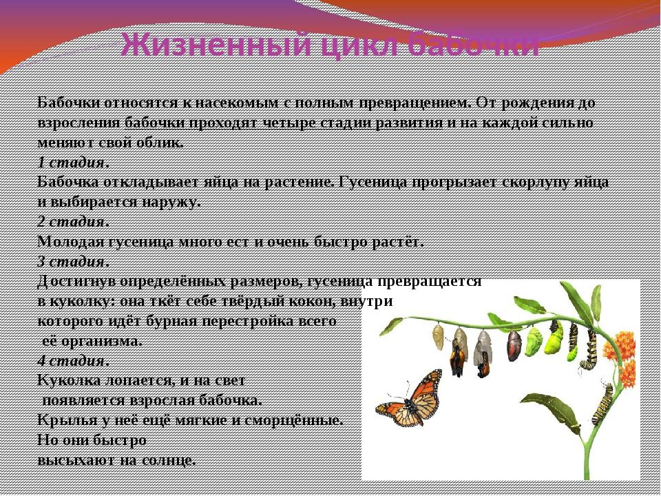 Жизненный цикл бабочки Бабочки относятся к насекомым с полным превращением. О...