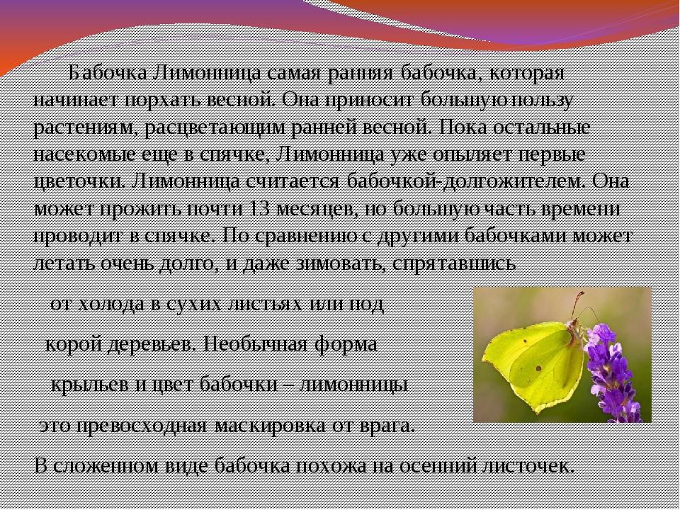 Бабочка Лимонница самая ранняя бабочка, которая начинает порхать весной. Она...