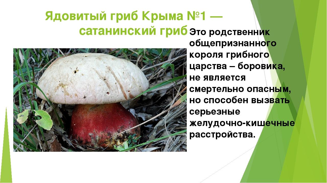 ядовитые грибы фото и описание кратко активно использовал фотографию