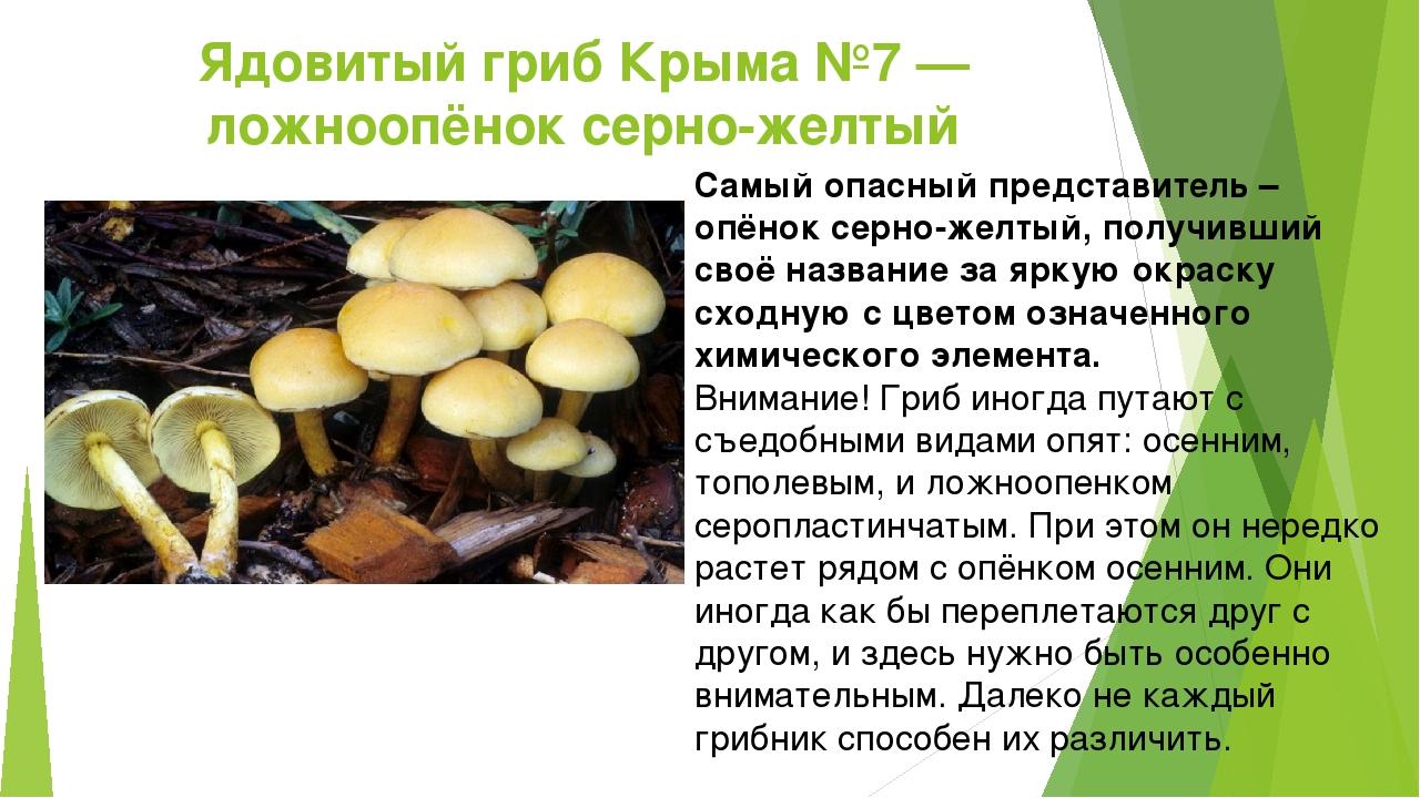 Ядовитые грибы фото и описание кратко